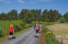 Chemin de Saint Guilhem (Aubrac 2020)